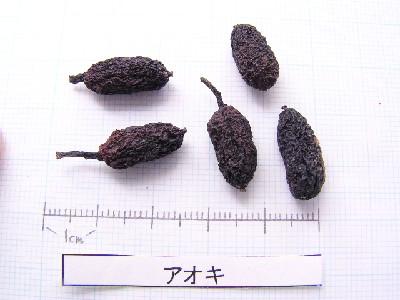 l_001_seed