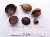 l_004_seed