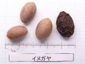 l_010_seed