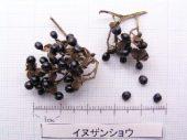 l_011_seed