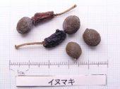 l_013_seed