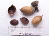 l_017_seed