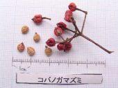 l_040_seed