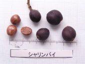 l_051_seed