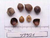 l_060_seed