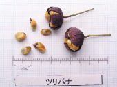 l_061_seed