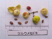 l_062_seed