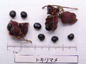 l_065_seed