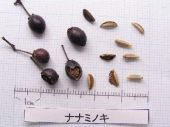l_067_seed