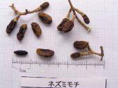 l_072_seed