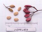 l_074_seed
