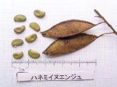 l_076_seed