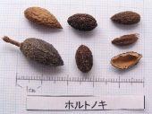 l_084_seed