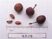 l_092_seed