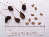 l_098_seed